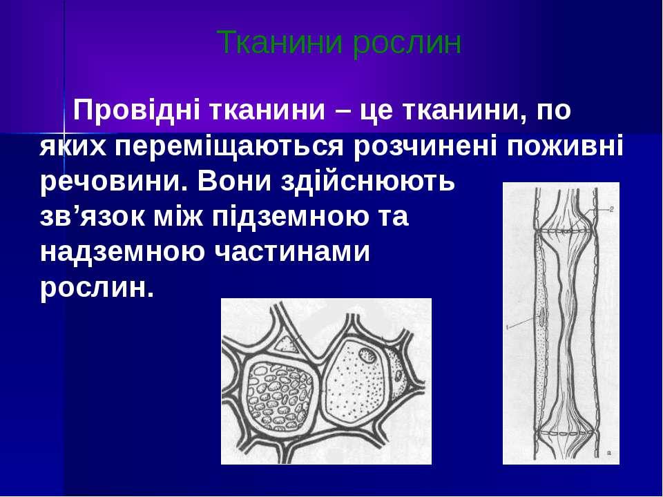 Тканини рослин Провідні тканини – це тканини, по яких переміщаються розчинені...