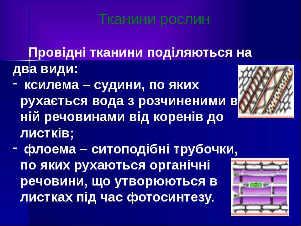 Тканини рослин Провідні тканини поділяються на два види: ксилема – судини, по...