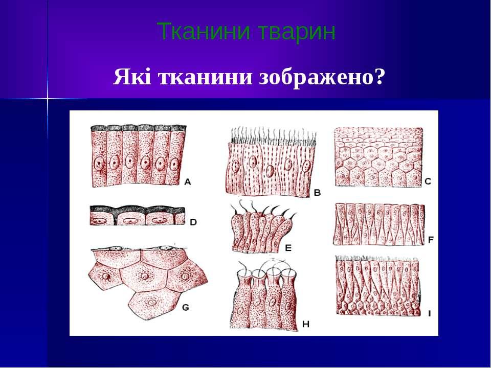 Тканини тварин Які тканини зображено?