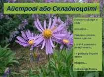 Айстрові або Складноцвіті Опівночі айстри в саду розцвіли... Умились росою, в...