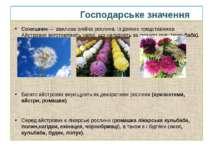 Господарське значення Соняшник — важлива олійна рослина. Із деяких представни...
