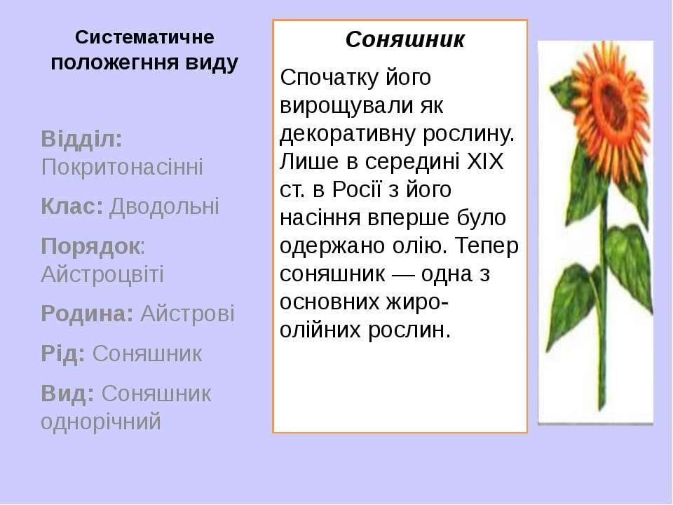 Систематичне положегння виду Соняшник Спочатку його вирощували як декоративну...