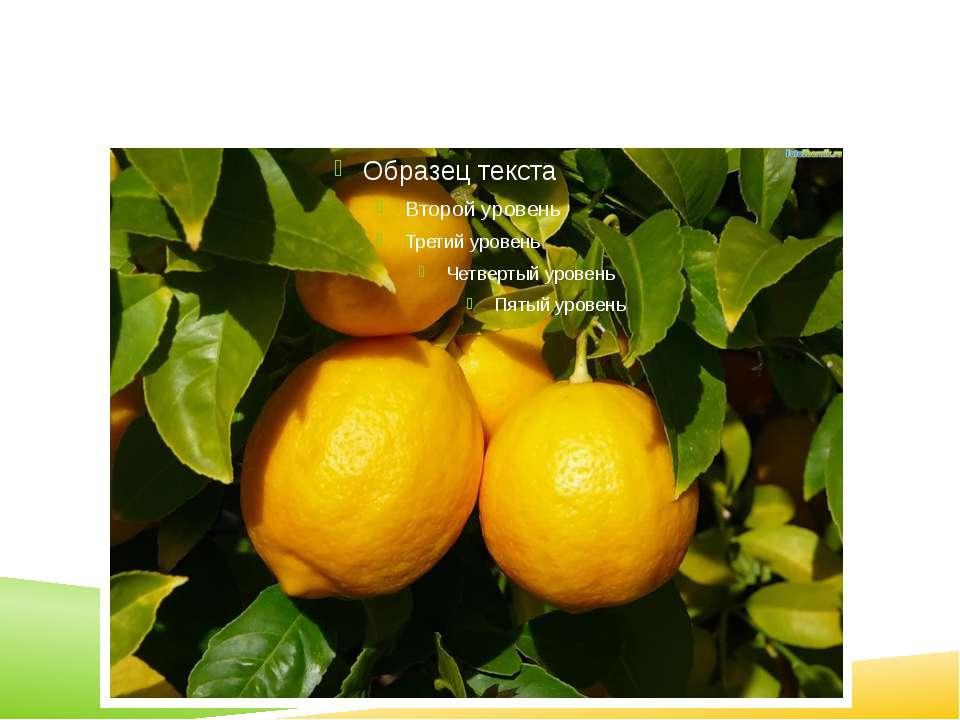 Окремі сорти лимона