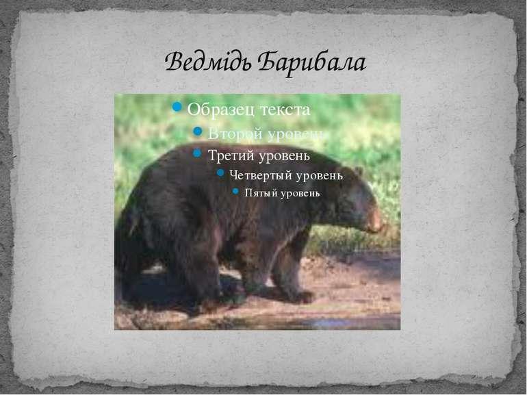 Ведмідь Барибала