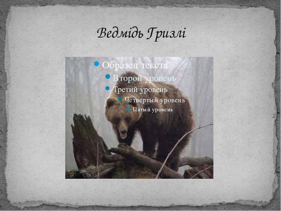 Ведмідь Гризлі