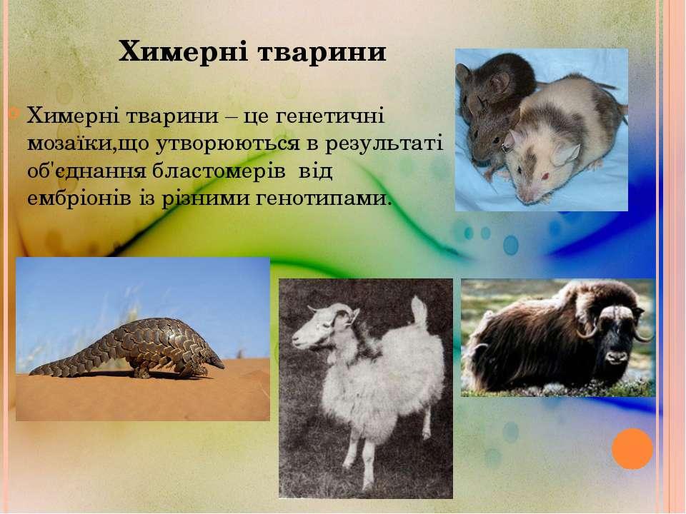 Химерні тварини Химерні тварини – це генетичні мозаїки,що утворюються в резул...