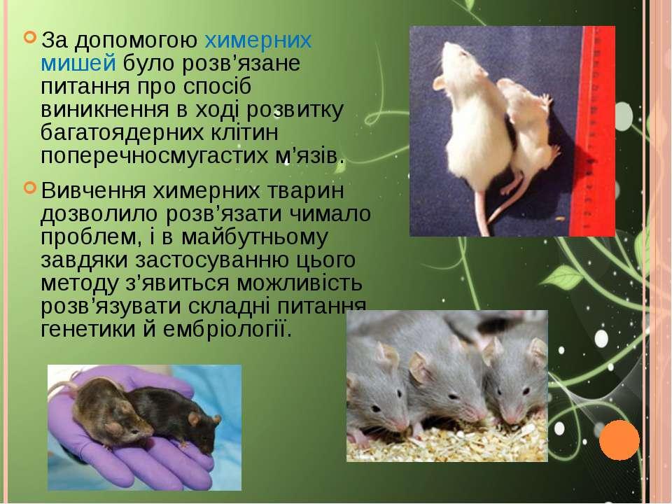 За допомогою химерних мишей було розв'язане питання про спосіб виникнення в х...