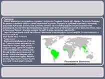 Поширення Безногі земноводні зустрічаються в тропіках і субтропіках Південно-...
