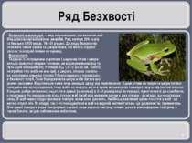Ряд Безхвості Безхвості земноводні — ряд земноводних, що включає най- більш в...