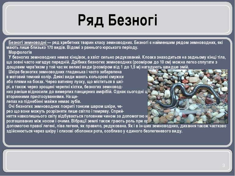 Ряд Безногі Безногі земноводні — ряд хребетних тварин класу земноводних. Безн...