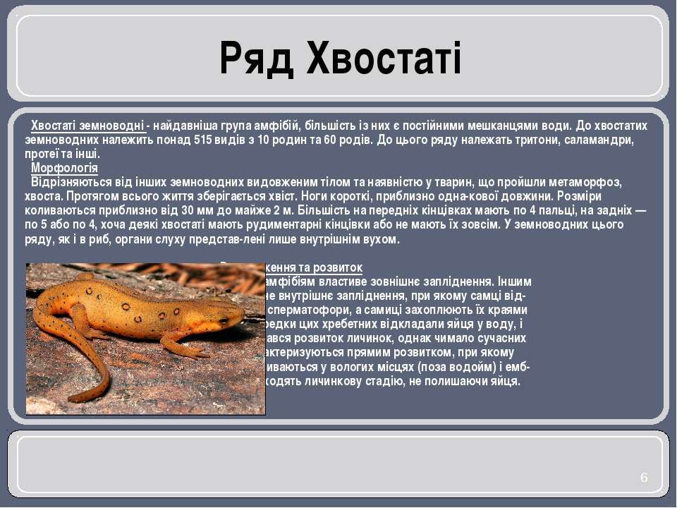 Хвостаті земноводні - найдавніша група амфібій, більшість із них є постійними...