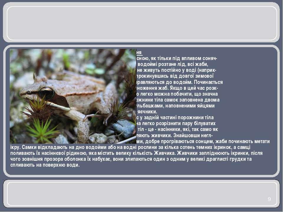Розмноження Ранньою весною, як тільки під впливом соняч- ного тепла у водоймі...