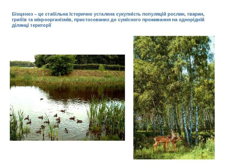Біоценоз – це стабільна історично усталена сукупність популяцій рослин, твари...