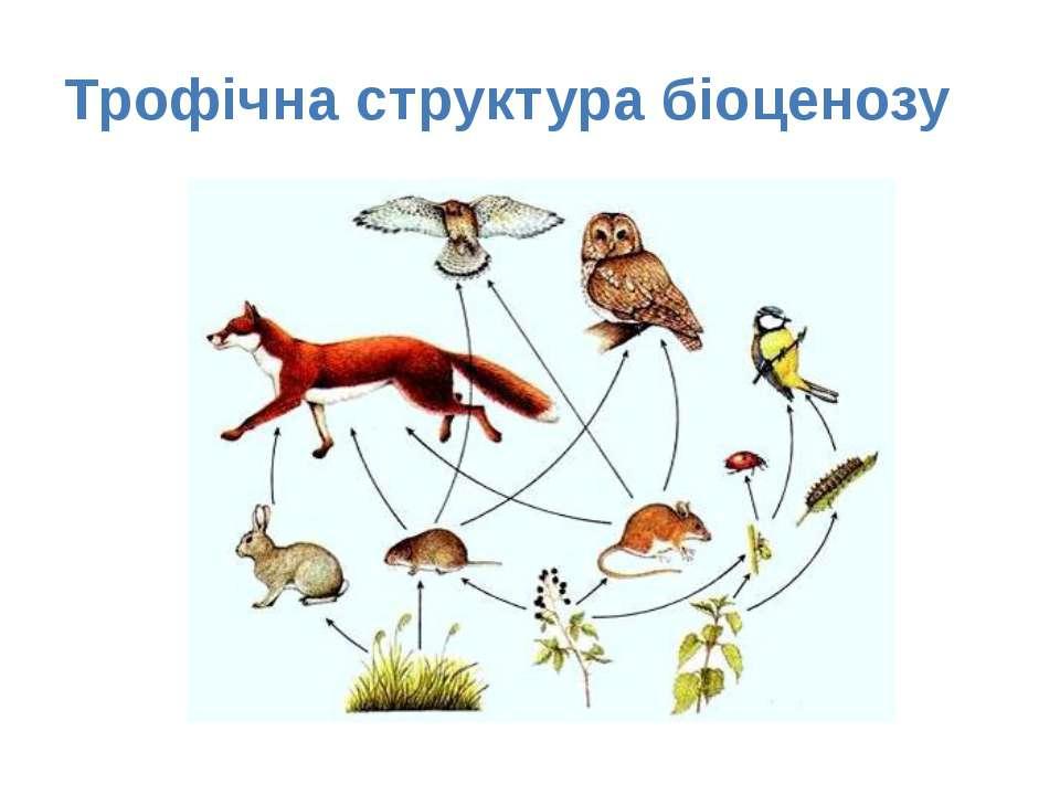 Трофічна структура біоценозу
