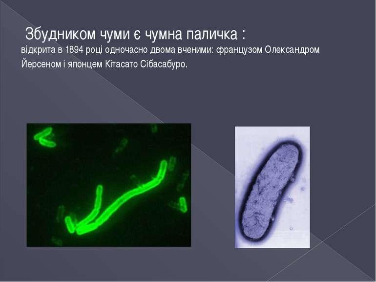 Збудником чуми є чумна паличка : відкрита в 1894 році одночасно двома вченими...