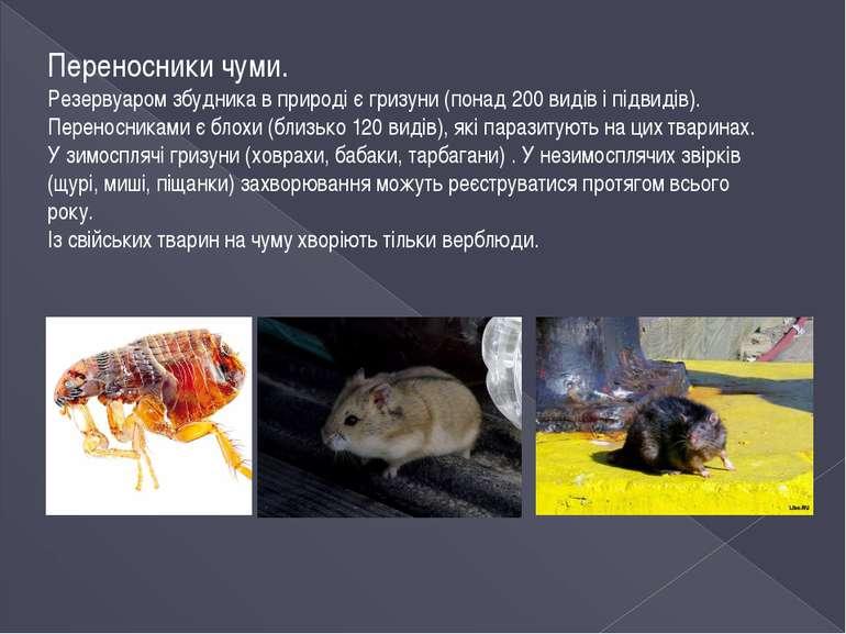 Переносники чуми. Резервуаром збудника в природі є гризуни (понад 200 видів і...