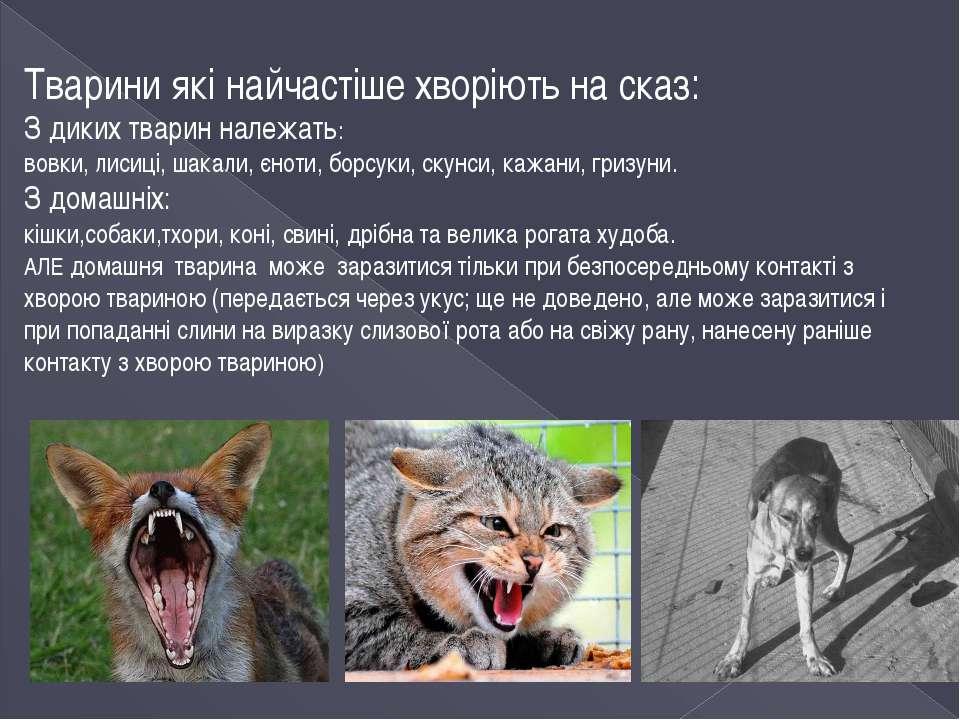 Тварини які найчастіше хворіють на сказ: З диких тварин належать: вовки, лиси...