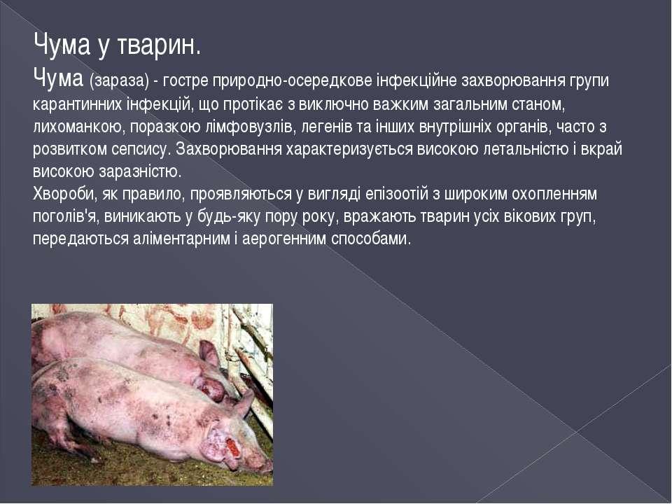 Чума у тварин. Чума (зараза) - гостре природно-осередкове інфекційне захворюв...
