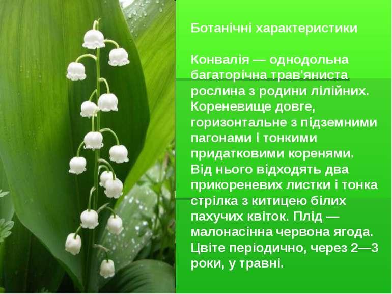 Ботанічні характеристики Конвалія — однодольна багаторічна трав'яниста рослин...