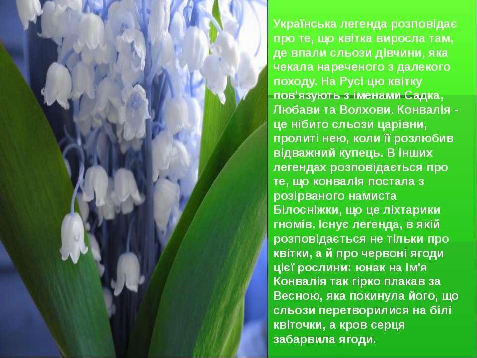 Українська легенда розповідає про те, що квітка виросла там, де впали сльози ...