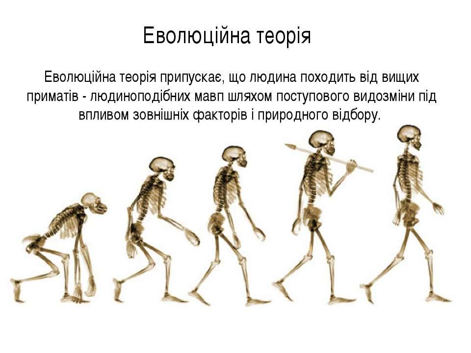 Еволюційна теорія Еволюційна теорія припускає, що людина походить від вищих п...