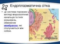 Ендоплазматична сітка це система порожнин у вигляді мікроскопічних канальців ...