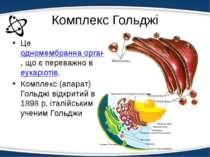 Комплекс Гольджі Це одномембранна органела, що є переважно веукаріотів. Компл...