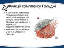 Функції комплексу Гольджі У цистернах комплексу Гольджі синтезуються деякі по...