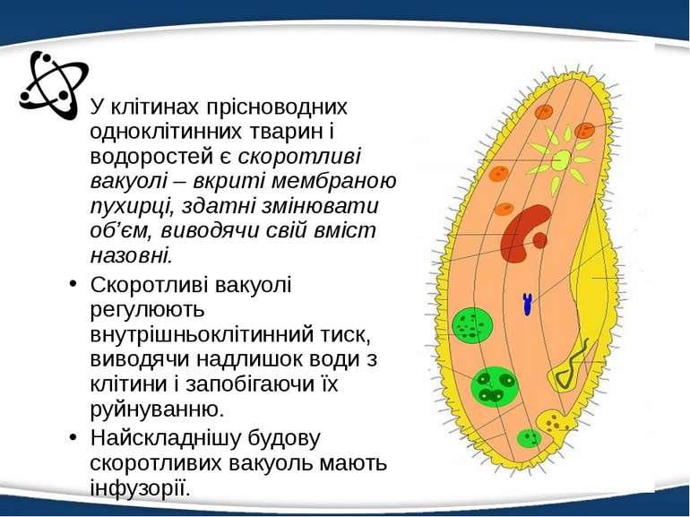 У клітинах прісноводних одноклітинних тварин і водоростей є скоротливі вакуол...