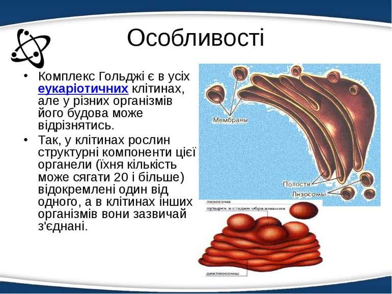 Особливості Комплекс Гольджі є в усіхеукаріотичнихклітинах, але у різних ор...