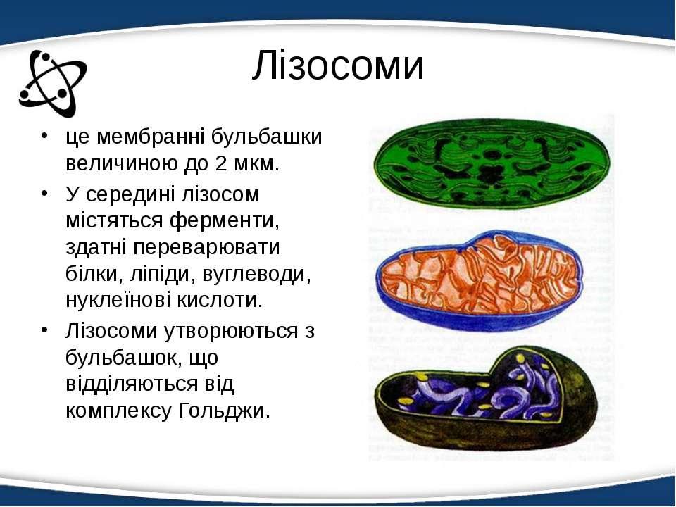 Лізосоми це мембранні бульбашки величиною до 2 мкм. У середині лізосом містя...
