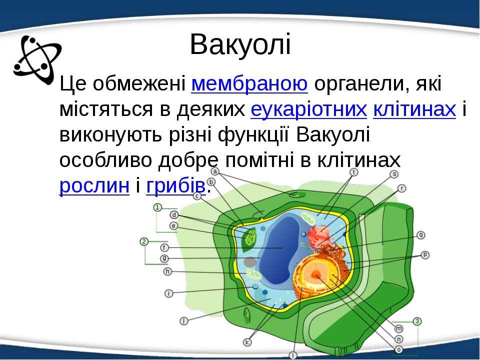 Вакуолі Це обмеженімембраноюорганели, які містяться в деякихеукаріотнихкл...