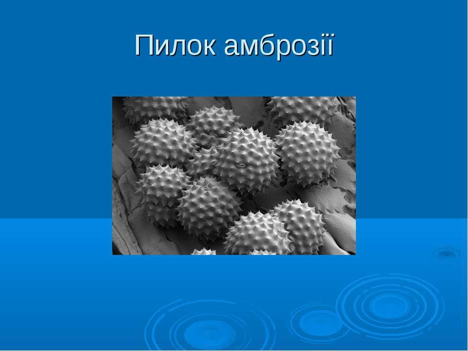 Пилок амброзії