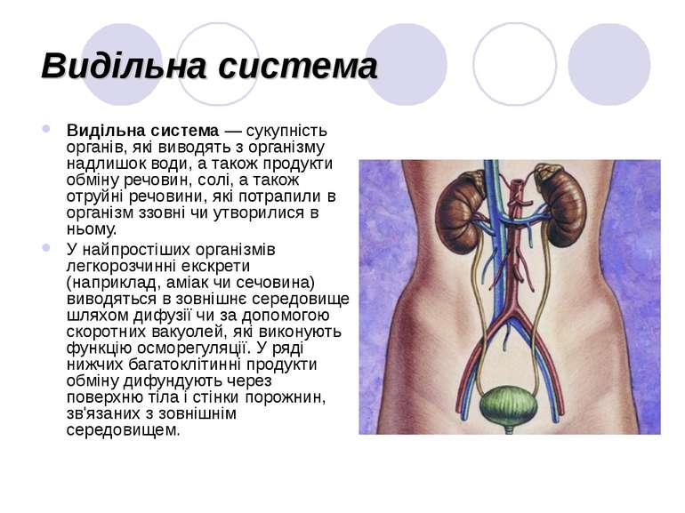 Видільна система Видільна система— сукупність органів, які виводять з органі...