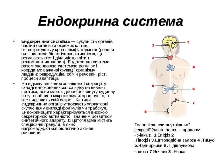 Ендокринна система Ендокри нна систе ма— сукупністьорганів, частин органів ...