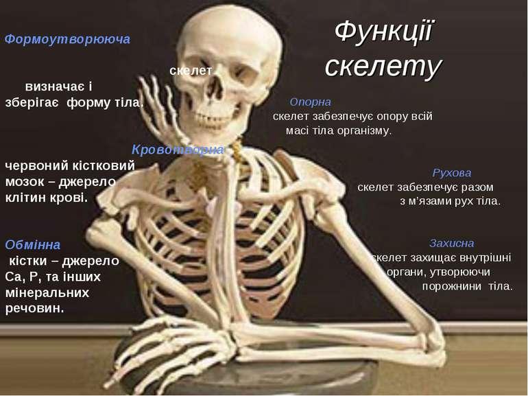 Функції скелету Опорна скелет забезпечує опору всій масі тіла організму. Рухо...