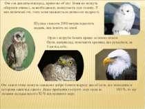 Орли і яструби бачать краще за інших птахів. Орли, наприклад, помічають кроли...
