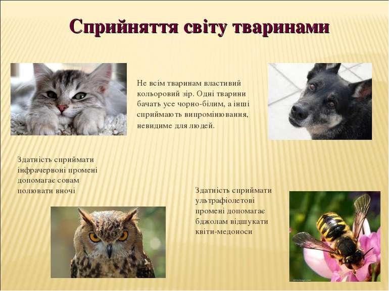 Не всім тваринам властивий кольоровий зір. Одні тварини бачать усе чорно-біли...