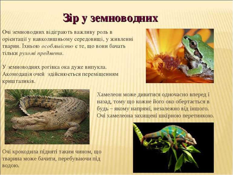 Очі земноводних відіграють важливу роль в орієнтації у навколишньому середови...