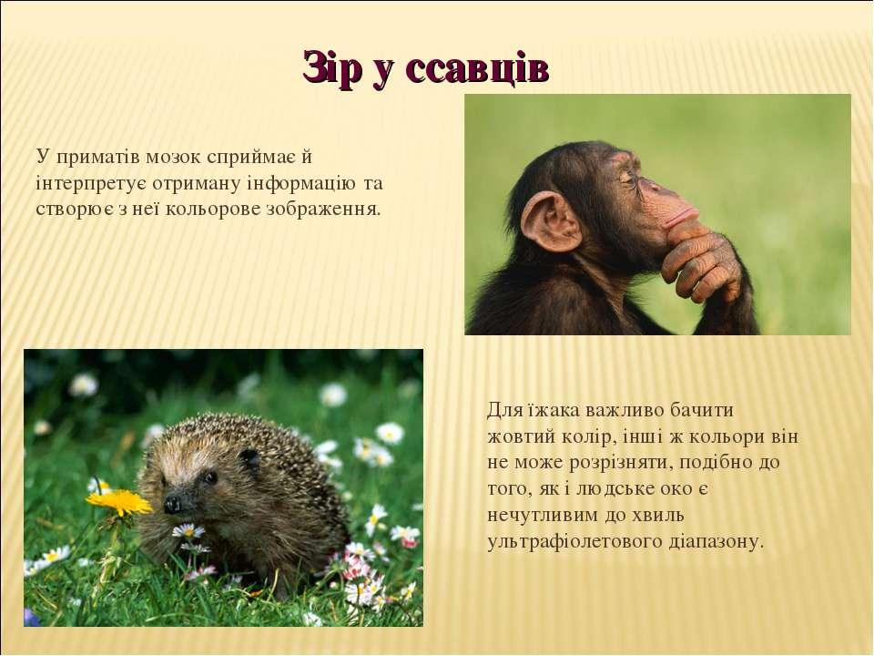 У приматів мозок сприймає й інтерпретує отриману інформацію та створює з неї ...