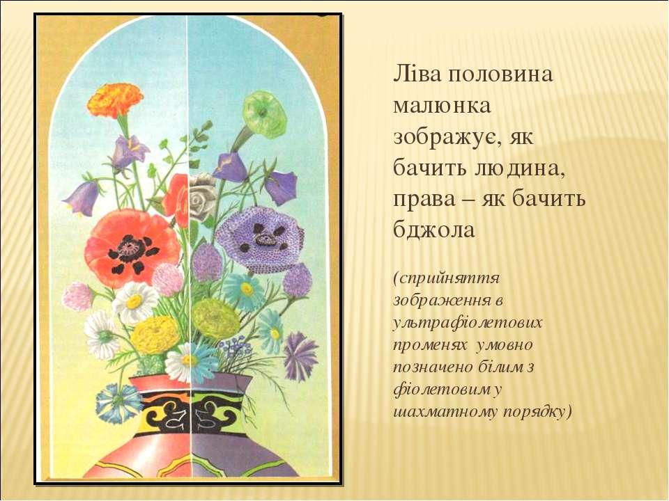 Ліва половина малюнка зображує, як бачить людина, права – як бачить бджола (с...