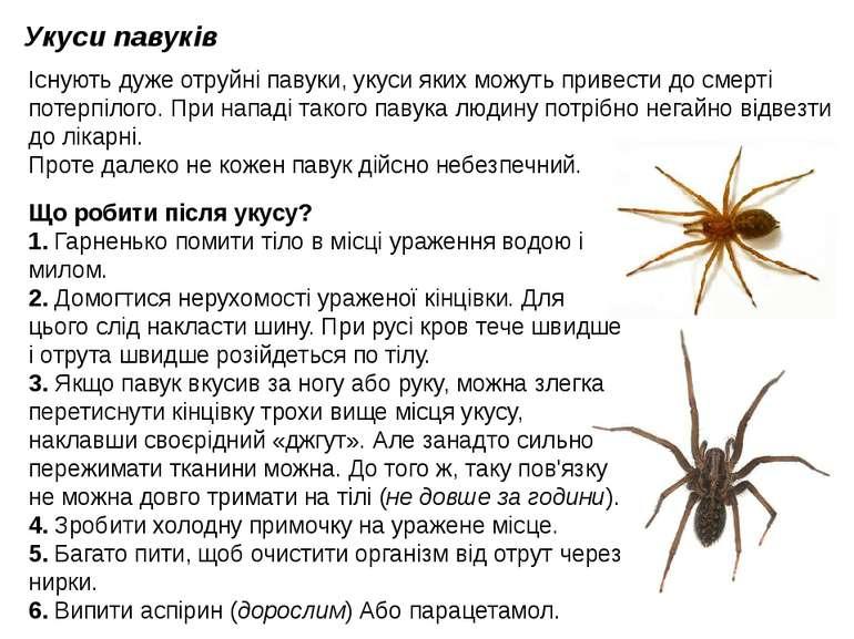 Укуси павуків Існують дуже отруйні павуки, укуси яких можуть привести до смер...