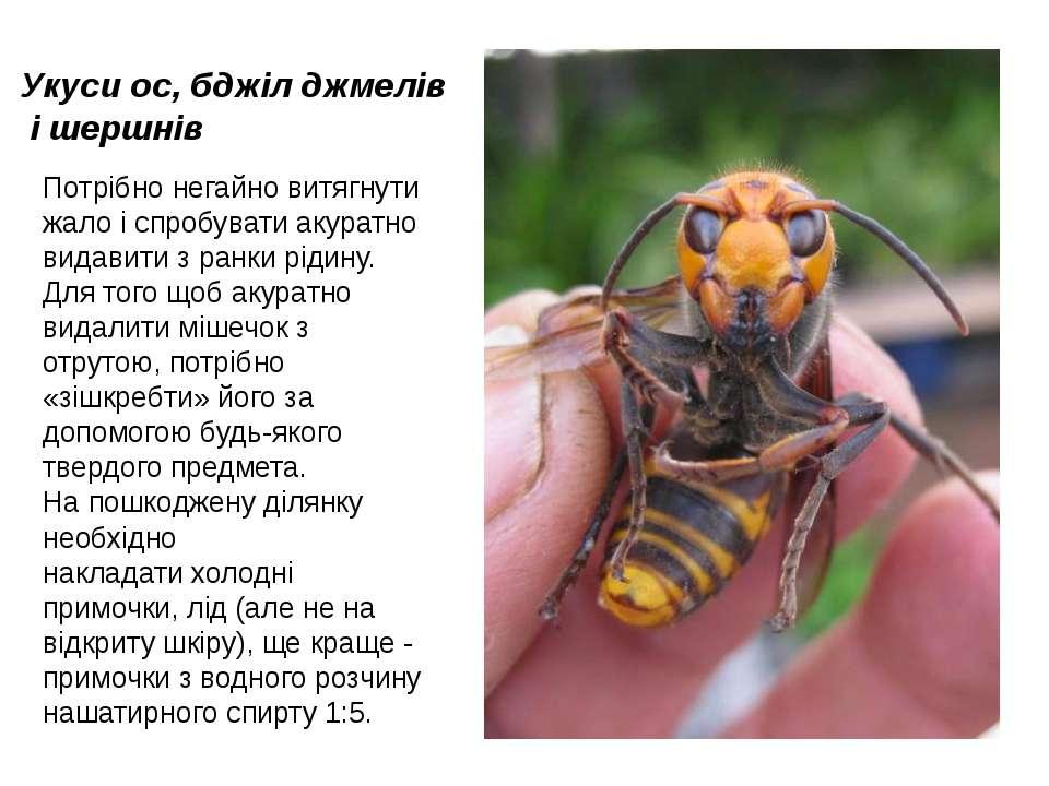 Укуси ос, бджіл джмелів і шершнів Потрібно негайно витягнути жало і спробуват...