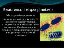 Властивості мікроорганізмів. Мікроорганізмам властива спадкова мінливість - м...
