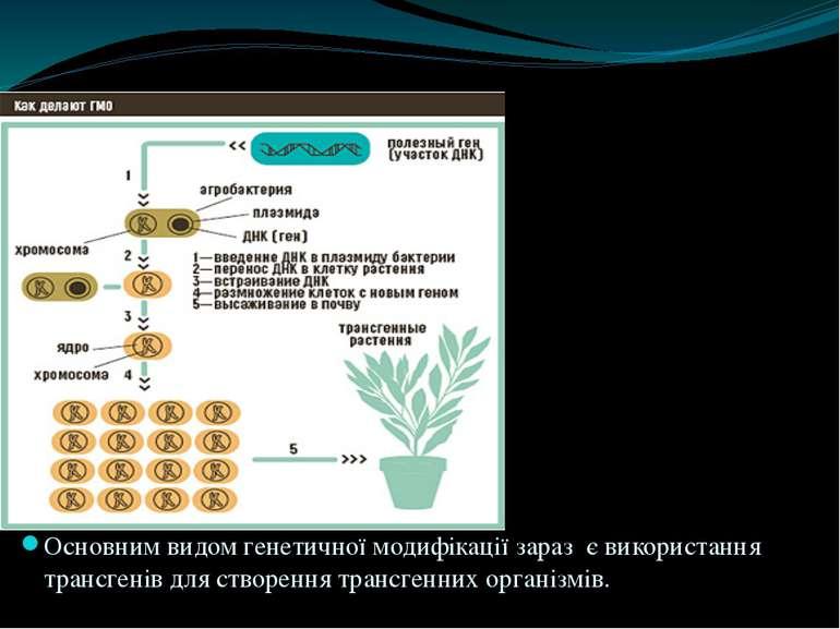 Генетично модифікований організм (ГМО) - живий організм, генотип якого був шт...