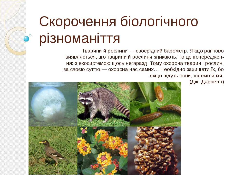 Скорочення біологічного різноманіття Тварини й рослини — своєрідний барометр....
