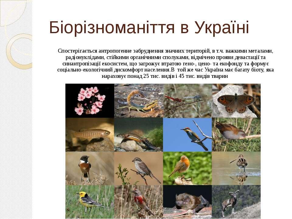 Біорізноманіття в Україні Спостерігається антропогенне забруднення значних те...