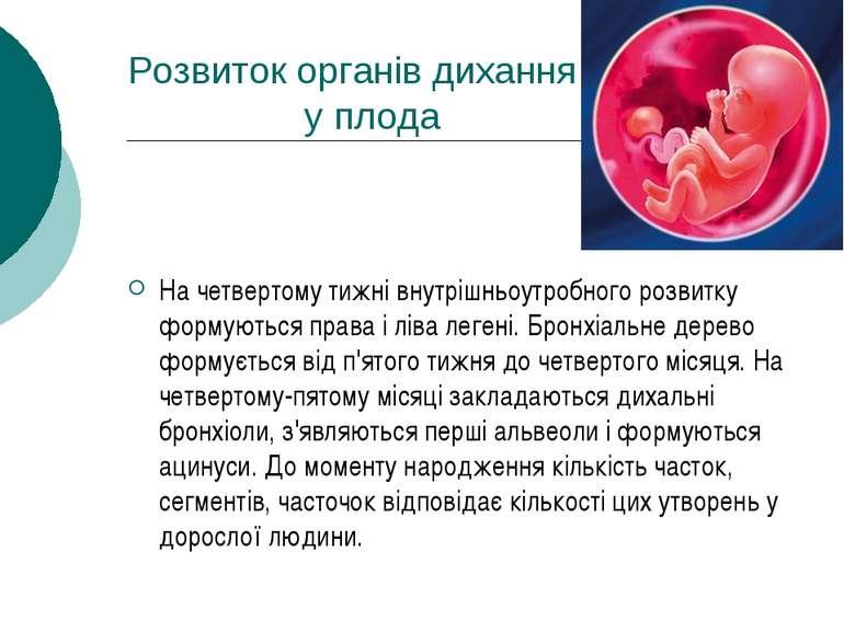 Розвиток органів дихання у плода На четвертому тижні внутрішньоутробного розв...