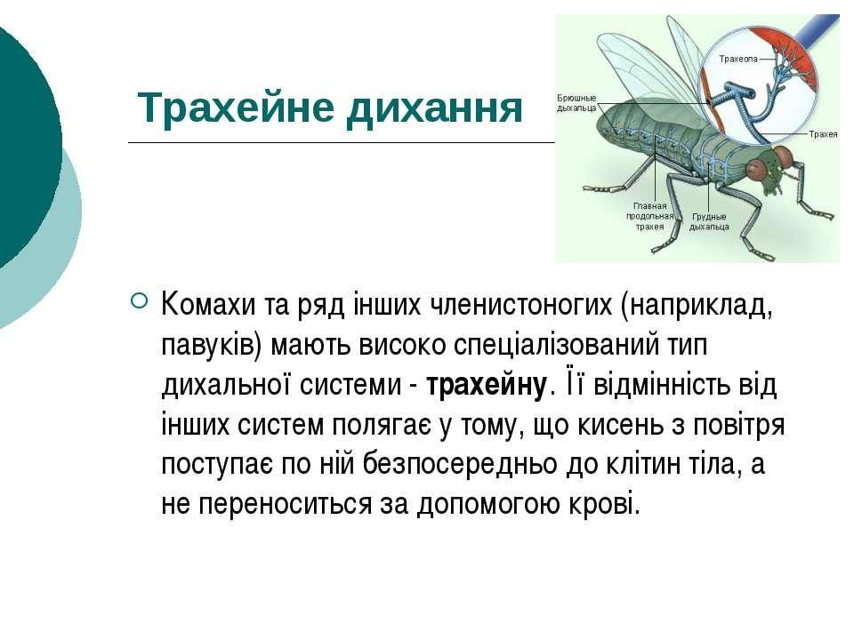 Трахейне дихання Комахи та ряд інших членистоногих (наприклад, павуків) мають...