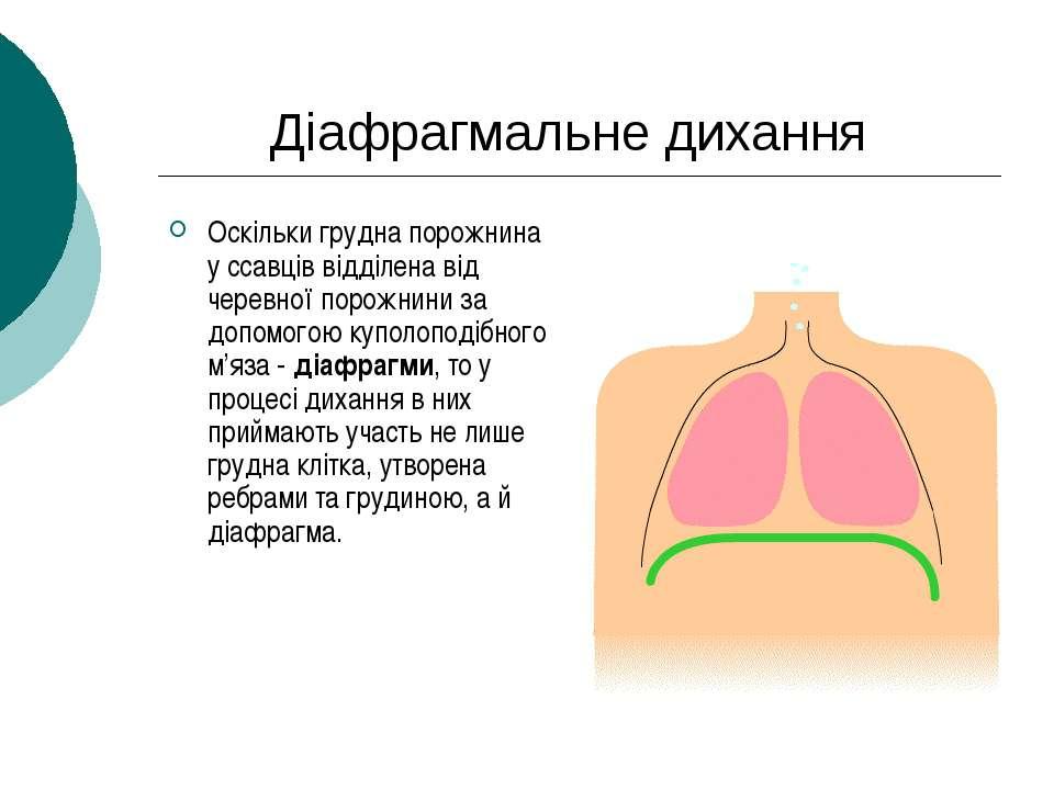 Діафрагмальне дихання Оскільки грудна порожнина у ссавців відділена від черев...